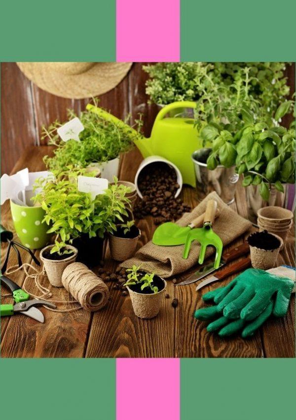 Gardening Your Way to Wellness